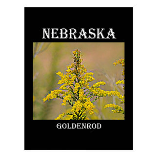 Nebraska Goldenrod Postcard