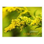 Nebraska State Flower: Goldenrod