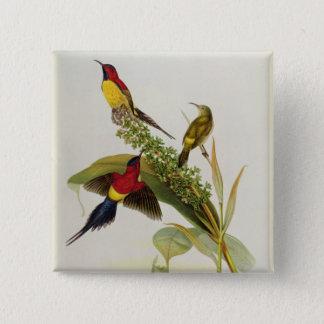 Nectarinia Gouldae 15 Cm Square Badge