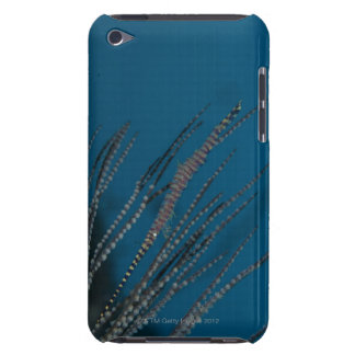 Needle shrimp (Tozeuma armatum) underwater Case-Mate iPod Touch Case