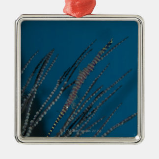 Needle shrimp (Tozeuma armatum) underwater Christmas Ornament
