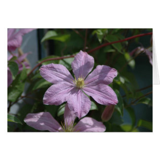 Nelly Moser Clematis 2009 Note Card