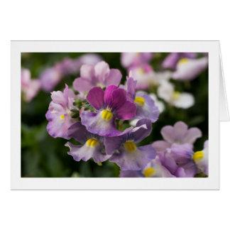 "Nemesia ""berries & cream"" card"