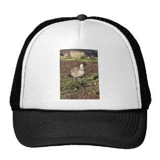 Nene Goose (Hawaiian goose) Hats