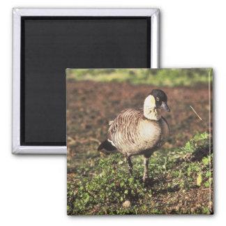 Nene Goose (Hawaiian goose) Refrigerator Magnet