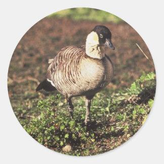 Nene Goose (Hawaiian goose) Round Sticker