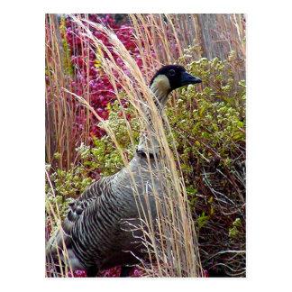 Nene Goose Postcard