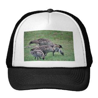 Nene Hats