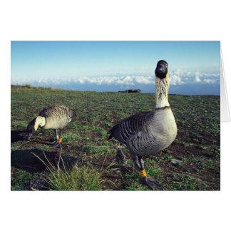 Nene Hawaiian Goose Greeting Card