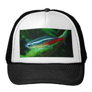 Neon Tetra Fish Paracheirodon Innesi Mesh Hats