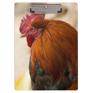 Nepal Rooster standing in Namche Bazaar Clipboard