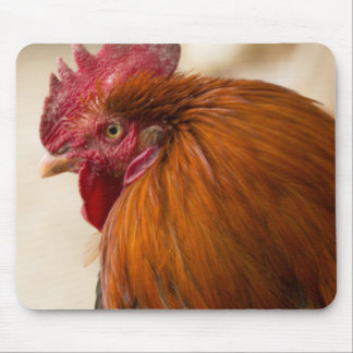 Nepal Rooster standing in Namche Bazaar Mouse Mat