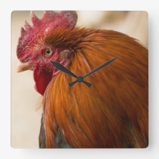 Nepal Rooster standing in Namche Bazaar Square Wall Clock