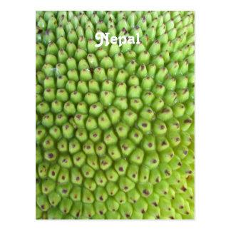 Nepalese Jackfruit Postcard