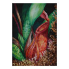 Nepenthes Of Mesilau Watercolor Art Poster