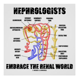 Nephrologists Embrace The Renal World (Nephron) Poster