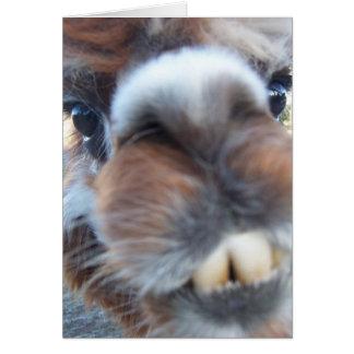 Nerdy Llama Card
