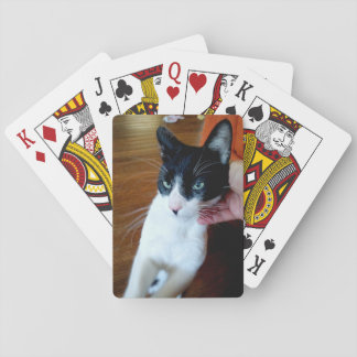 Nero the cat playing cards