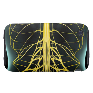 Nerves of the Lower Back iPhone 3 Tough Covers