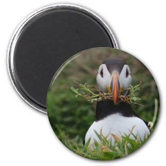 Nest Builder Puffin Magnet