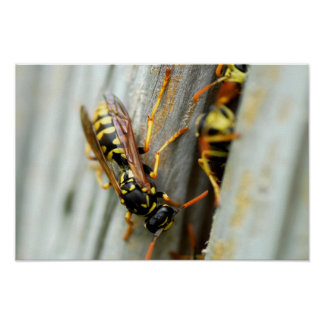 Nest of wasps poster