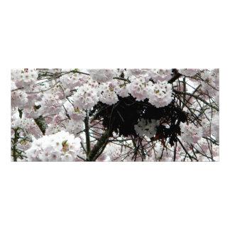 Nest Rack Card