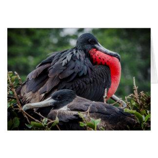 Nesting Frigate Bird pair Cards