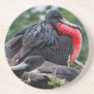 Nesting Frigate Bird pair Coasters