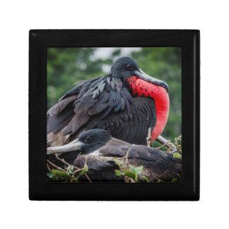 Nesting Frigate Bird pair Keepsake Box