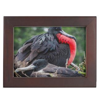 Nesting Frigate Bird pair Memory Boxes