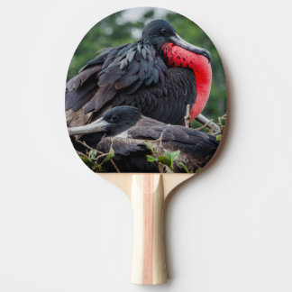 Nesting Frigate Bird pair Ping Pong Paddle