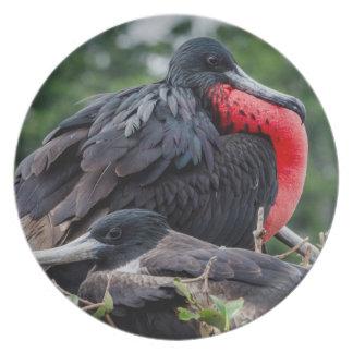 Nesting Frigate Bird pair Plate