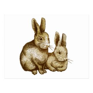 Netherland Dwarf Rabbit はがき