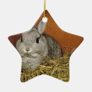 Netherland Dwarf Rabbit Ceramic Star Decoration