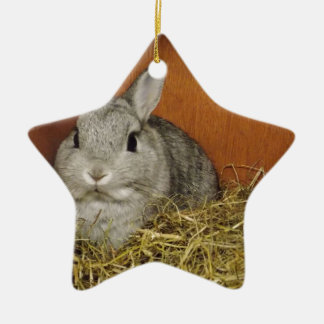 Netherland Dwarf Rabbit Christmas Ornament