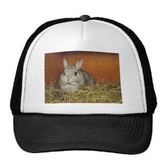 Netherland Dwarf Rabbit Hats