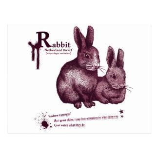 Netherland Dwarf Rabbit -jam ポストカード