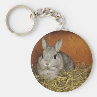 Netherland Dwarf Rabbit Key Chains