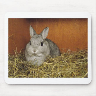Netherland Dwarf Rabbit Mouse Mats