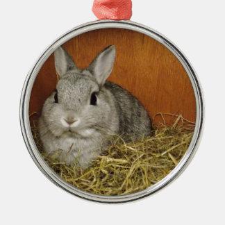 Netherland Dwarf Rabbit Silver-Colored Round Decoration