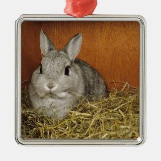 Netherland Dwarf Rabbit Silver-Colored Square Decoration
