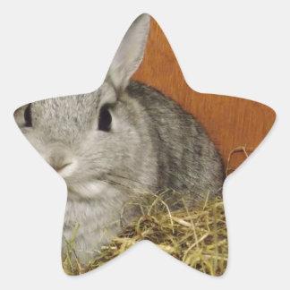 Netherland Dwarf Rabbit Star Sticker