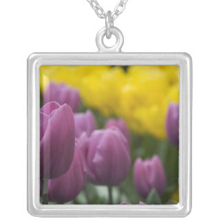 Netherlands aka Holland), Lisse. Keukenhof 10 Silver Plated Necklace