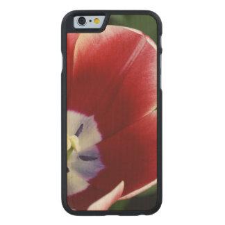 Netherlands (aka Holland), Lisse. Keukenhof 3 Carved® Maple iPhone 6 Slim Case