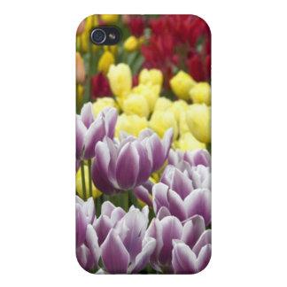 Netherlands aka Holland), Lisse. Keukenhof 3 iPhone 4/4S Cases