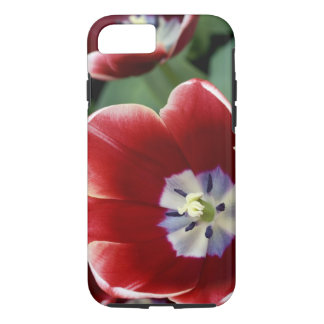 Netherlands (aka Holland), Lisse. Keukenhof 3 iPhone 8/7 Case