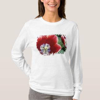 Netherlands (aka Holland), Lisse. Keukenhof 3 T-Shirt
