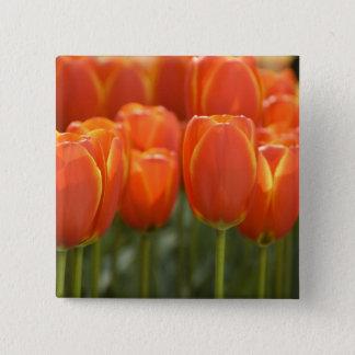 Netherlands aka Holland), Lisse. Keukenhof 7 15 Cm Square Badge