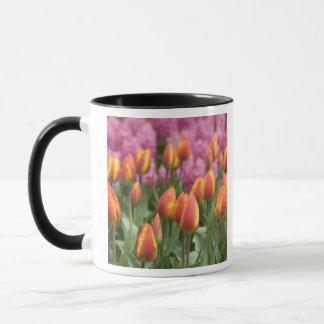 Netherlands (aka Holland), Lisse. Keukenhof Mug