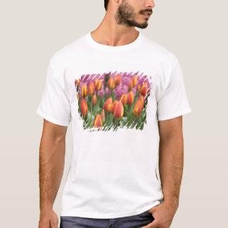 Netherlands (aka Holland), Lisse. Keukenhof T-Shirt